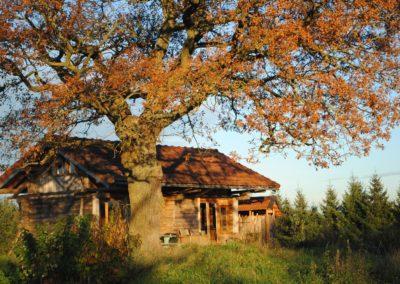Vakantiehuis, Blokhut bij de eik