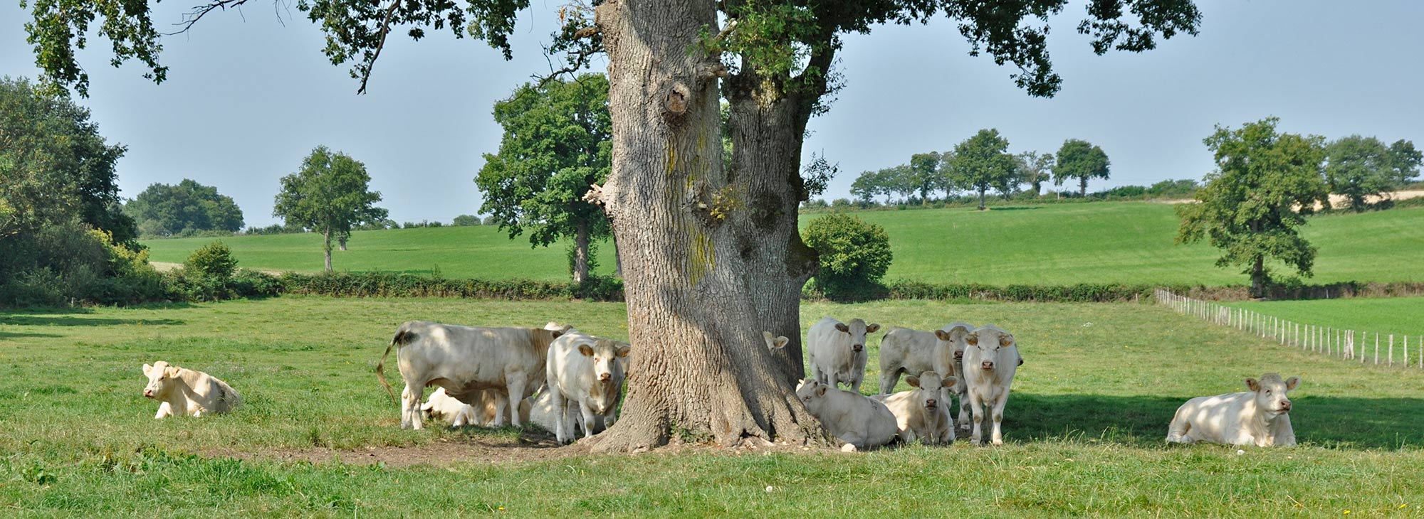 pastorale - omgeving - Brenazet -foto Connie Dekker